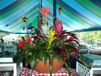 Polynesia Theme Party | The Enchantment of Polynesia Theme Party
